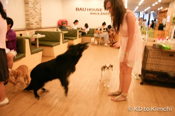 BAU HAUS - Dog Cafe (15 of 37)