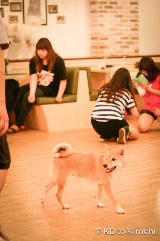 BAU HAUS - Dog Cafe (2 of 37)