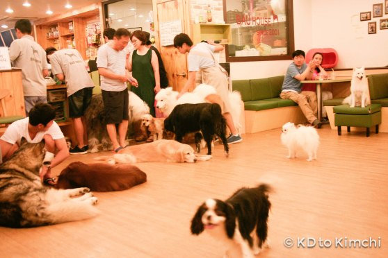 BAU HAUS - Dog Cafe (25 of 37)