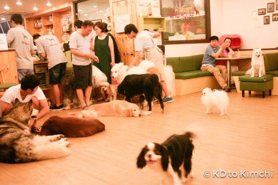 BAU HAUS - Dog Cafe (25 of 37)
