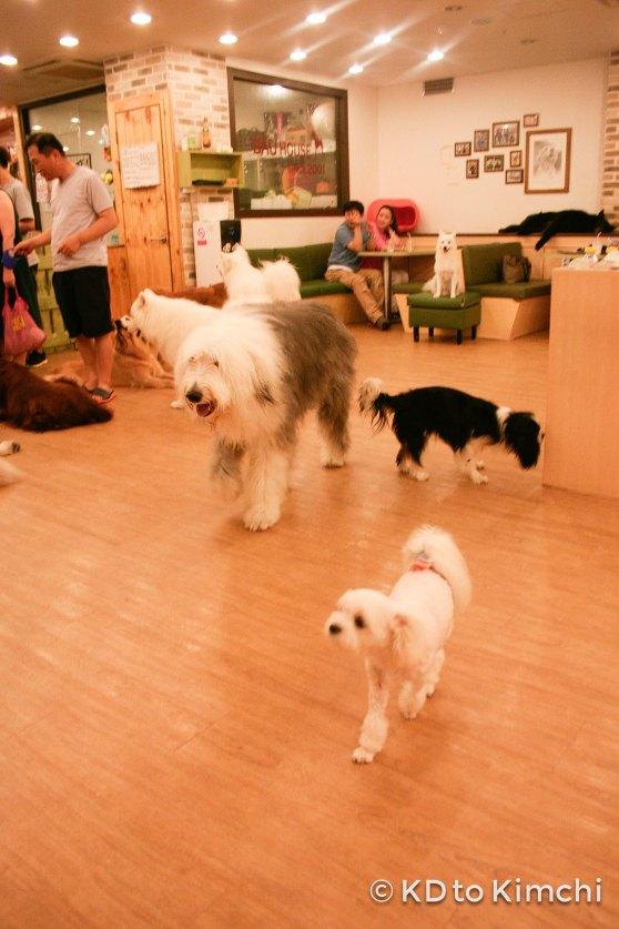BAU HAUS - Dog Cafe (26 of 37)
