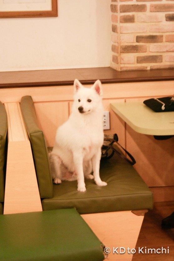 BAU HAUS - Dog Cafe (27 of 37)