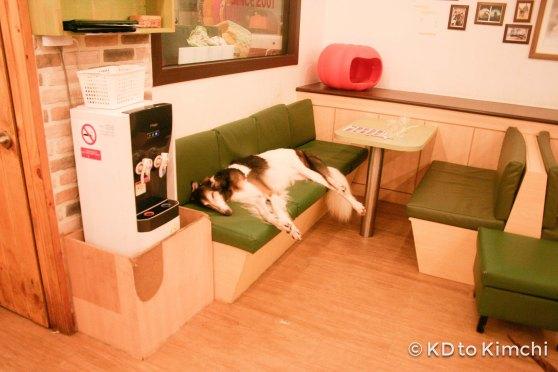 BAU HAUS - Dog Cafe (28 of 37)