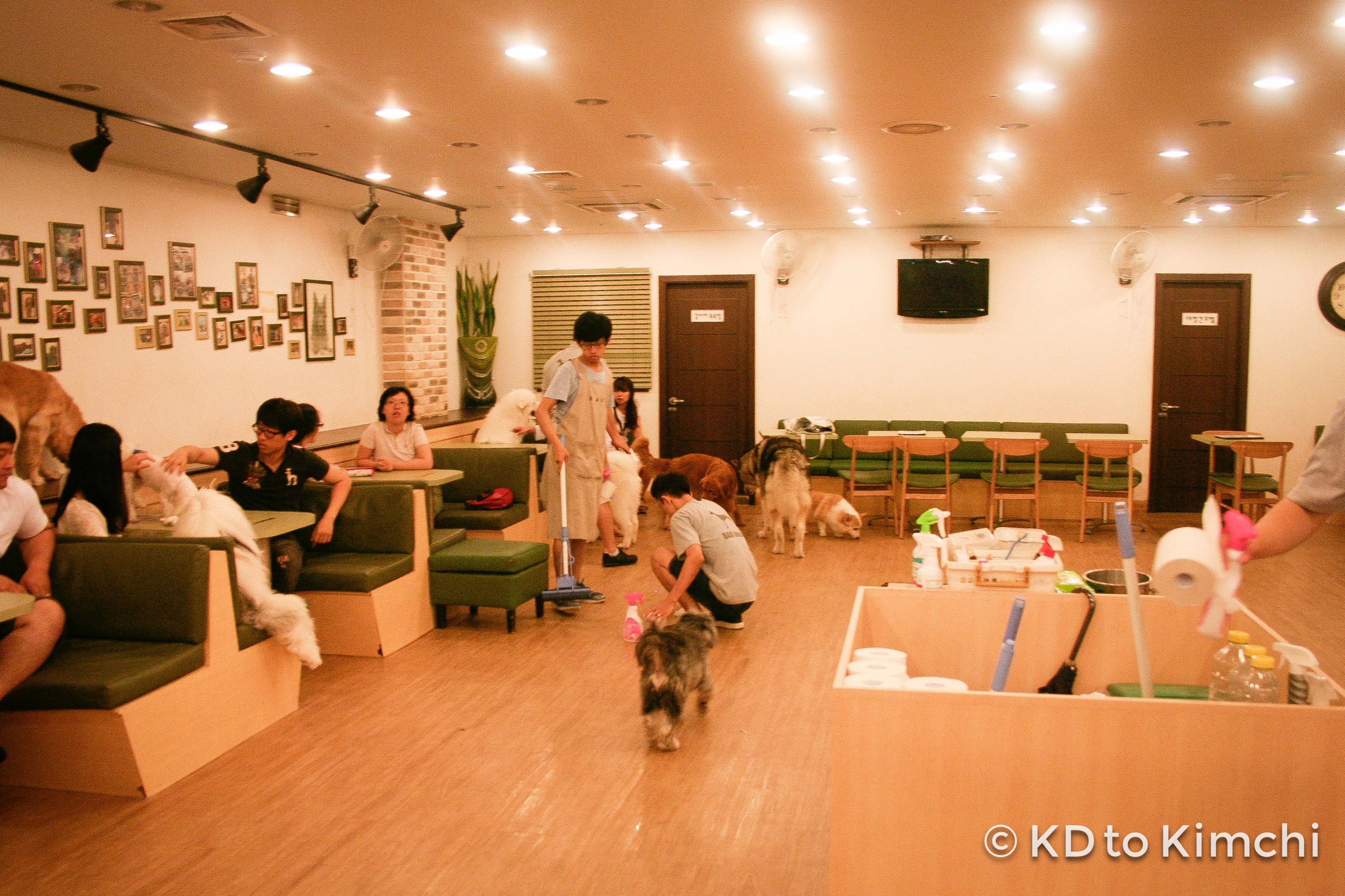 Checking out BAU HOUSE: a Korean dog café! | From KD to Kimchi