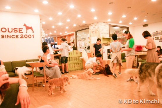 BAU HAUS - Dog Cafe (3 of 37)