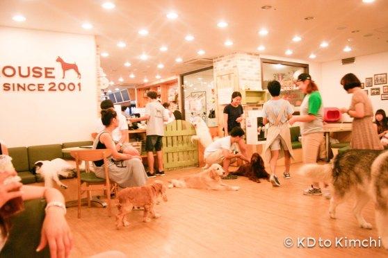 BAU HAUS - Dog Cafe (3 of 37)