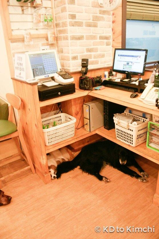 A cozy spot under the cash register!