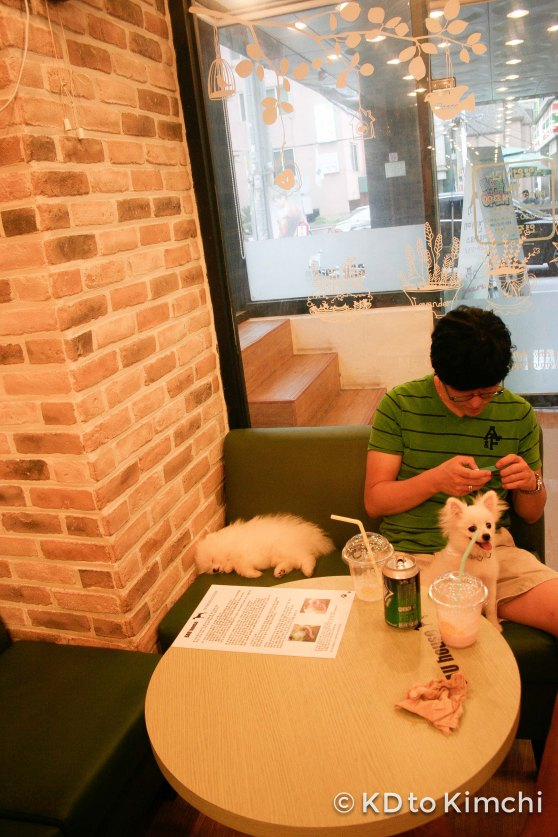 BAU HAUS - Dog Cafe (32 of 37)