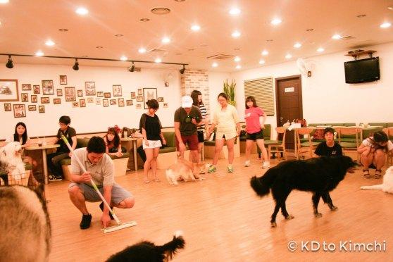 BAU HAUS - Dog Cafe (4 of 37)