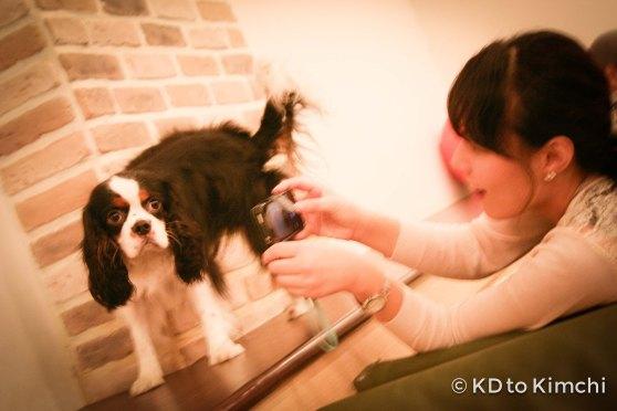 BAU HAUS - Dog Cafe (6 of 37)