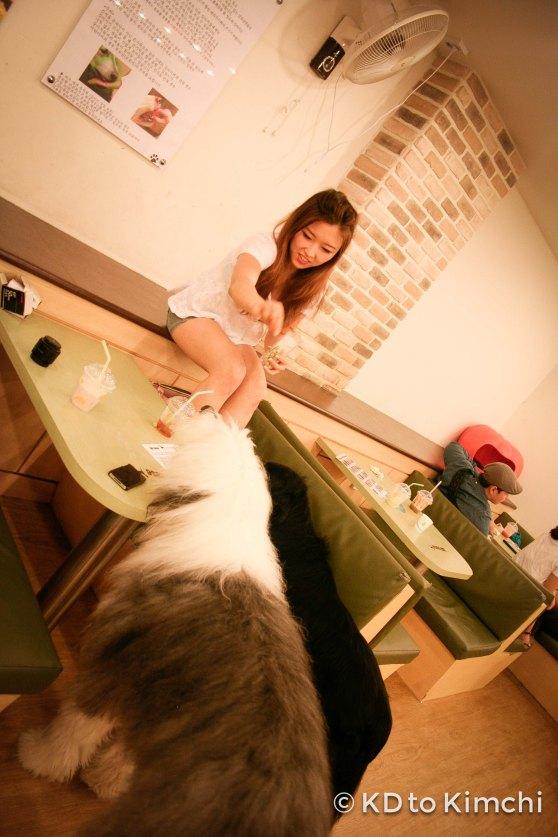 BAU HAUS - Dog Cafe (9 of 37)